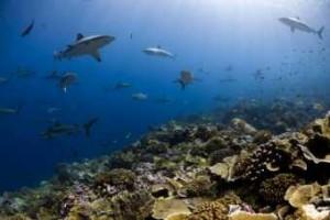 shark-waters